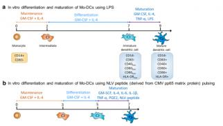 Closing the system: production of viral antigen-presenting dendritic cells